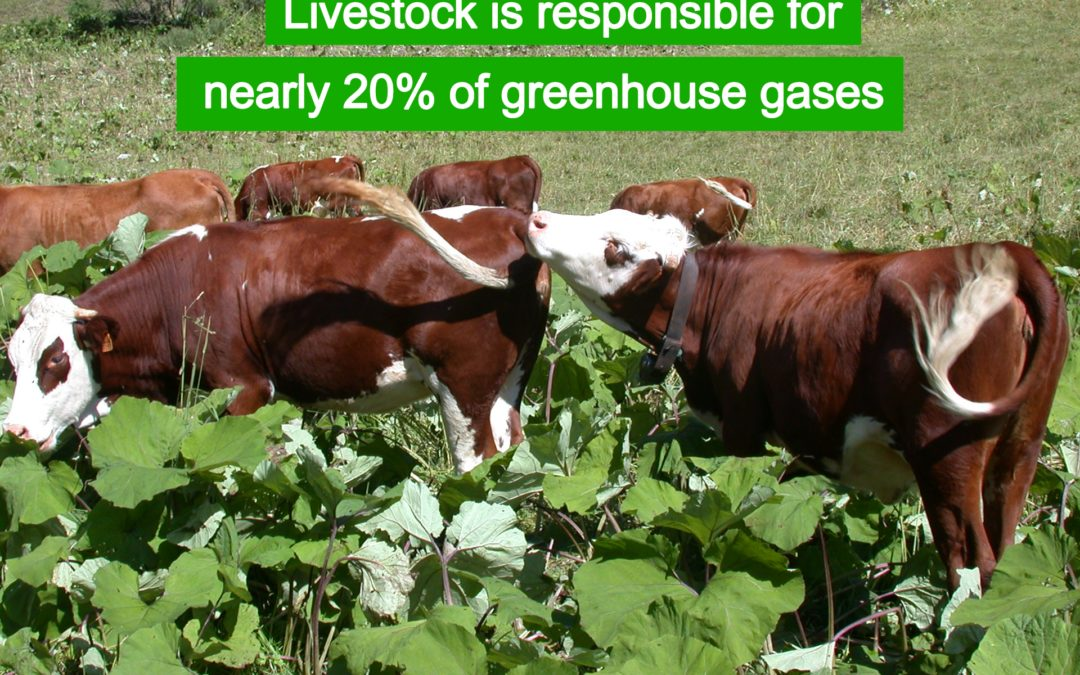 Meet the environmental impact of meat