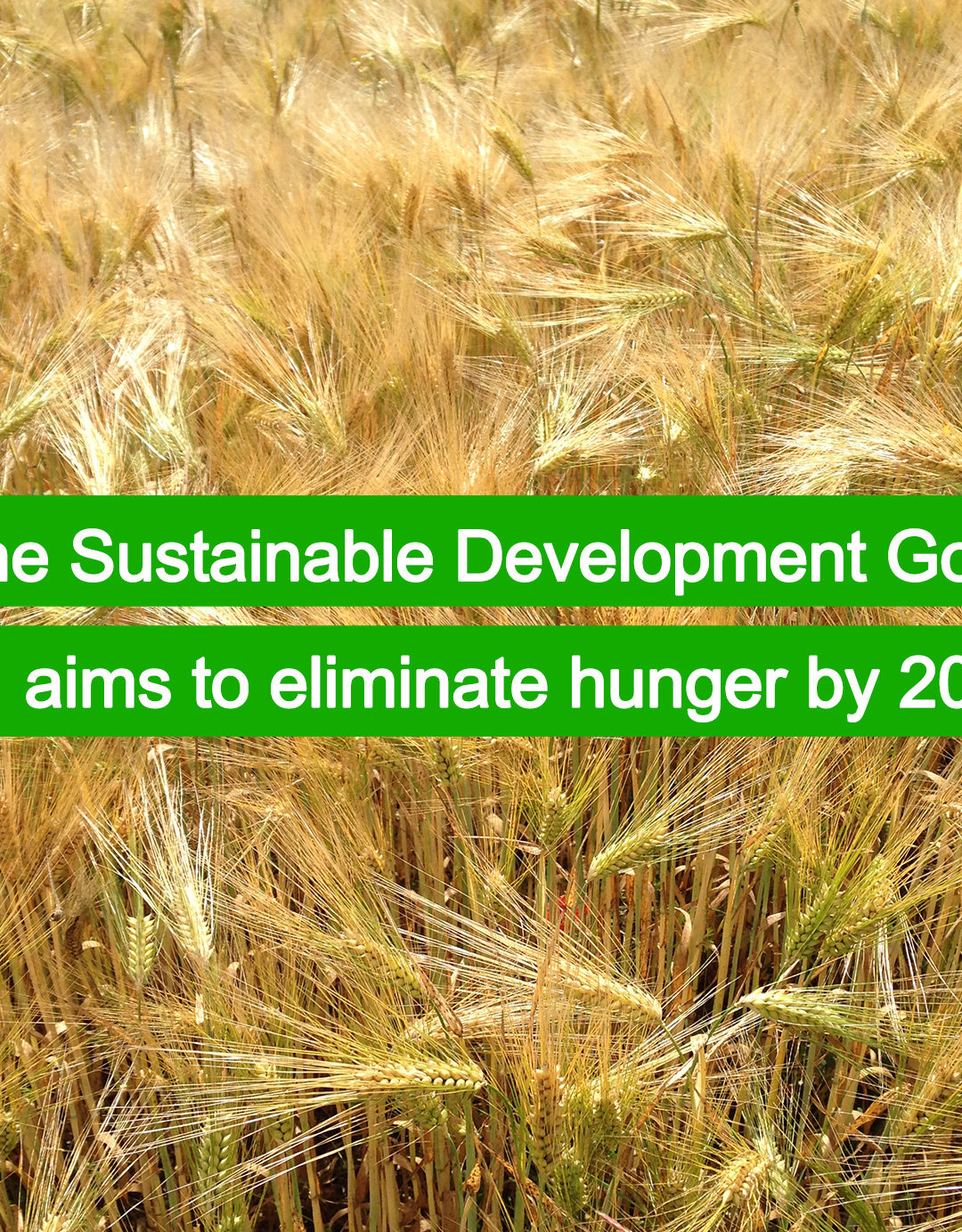 Zero hunger by 2030?